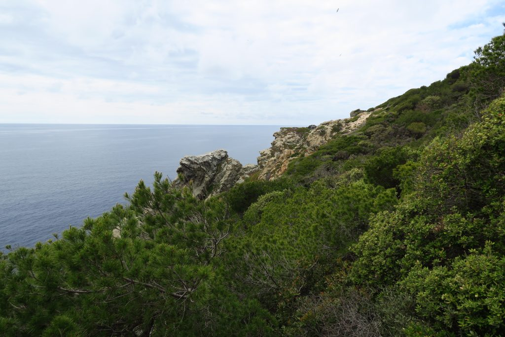 View of water from the green hills and mountains of Porquerolles.