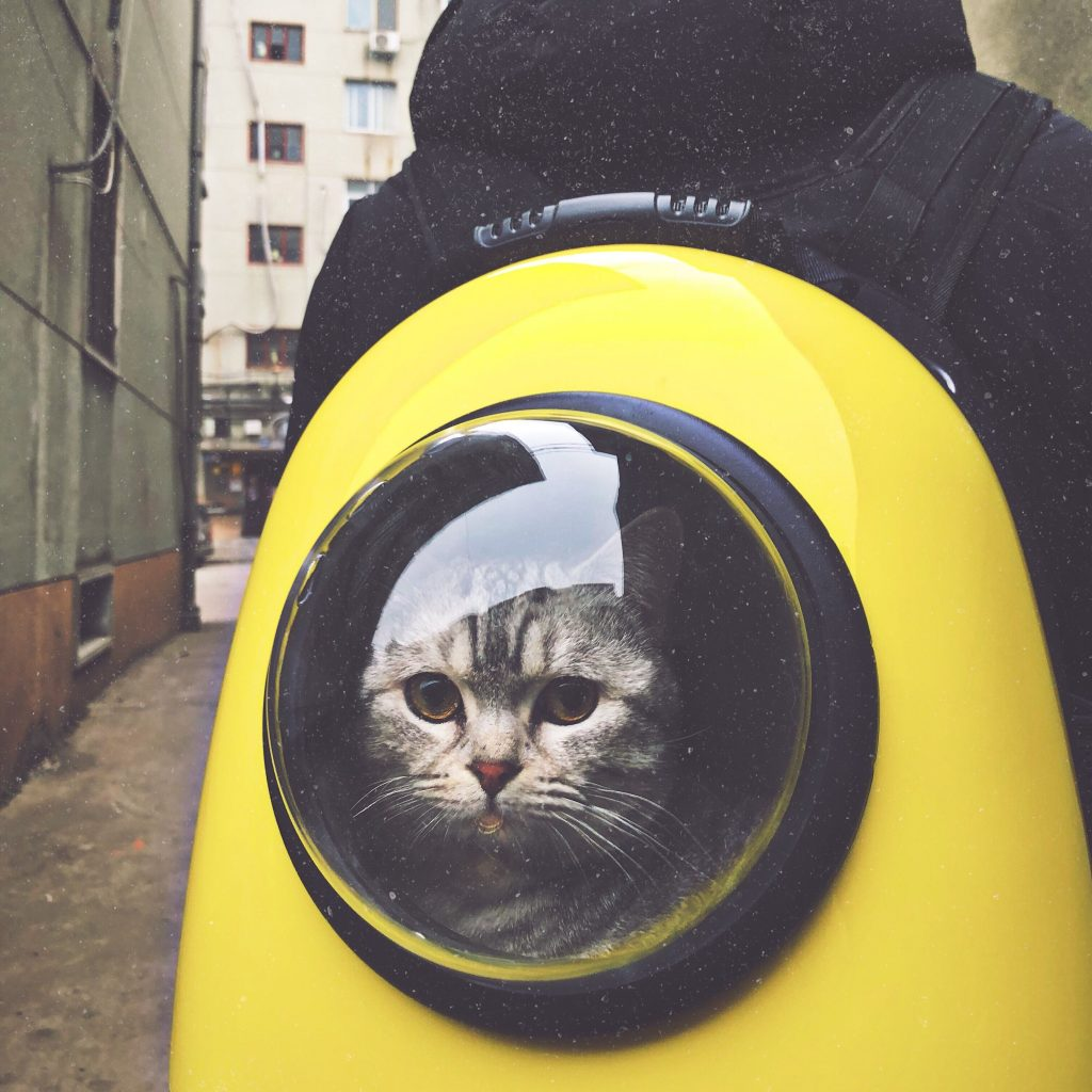 Cat looking out circular window in a bright yellow backpack.